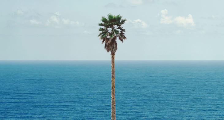 Palm tree/Seascape